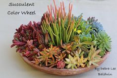 Succulents are perfect plants for dry gardens and are easy to root and grow. Once you learn how easy it is to propagate succulent plants, it's a great way to expand your plant collection – and it's free! You can… Continue Reading → Rainbow Centerpiece, Succulent Centerpieces, Succulent Arrangements, Succulent Pots, Planting Succulents, Succulent Gardening, Types Of Succulents, Colorful Succulents, Succulents In Containers