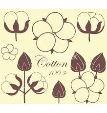cotton plant - Google Search