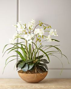 H7CB5 Faux Moth Orchid in Planter