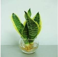 resultado de imagen para plantas en agua interior