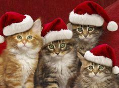 Christmas-Cats-1435936-bigthumbnail Christmas-Cats-1435936-bigthumbnail