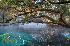 Fern Hammock Springs , Juniper Springs,Ocala National Forest, Florida