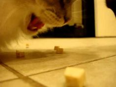 Ragdoll Cats Eat The Honest Kitchen Wishes Cat Treats  ねこ Mesmerizing Honest Kitchen Reviews Design Ideas