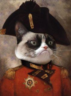Gatto da generale inglese
