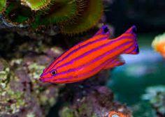 Resultado de imagen para most beautiful fishes