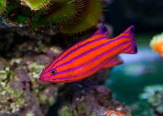 Image result for colourful fish