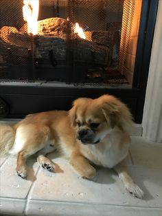 Fostar loving his fireside chill out