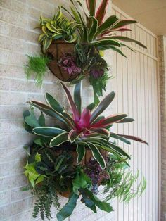 wall Garden Pots - Focal Wall Planters with a New Twist. Outdoor Plants, Air Plants, Garden Plants, Garden Walls, Plants Indoor, Garden Bed, Shade Plants, Balcony Garden, Potted Plants