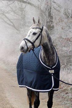 Hvilken farve passer til din hest? Måske denne.