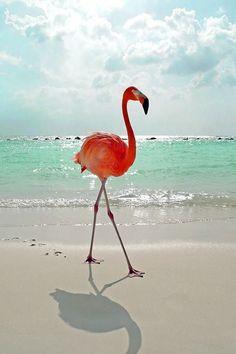 Pink flamenco walking on the beach