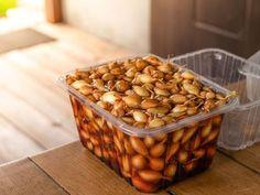 Jak si urychlit klíčení semen za pomoci přírodních surovin, respektive bylinek - ČESKÉSTAVBY.cz Dog Food Recipes, Dog Recipes