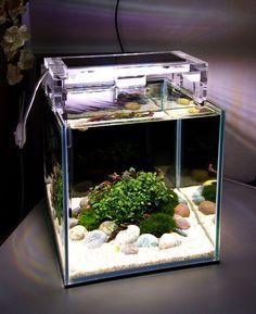 140 Ideas De Fish Tank Peceras Acuarios Diseño De Acuario