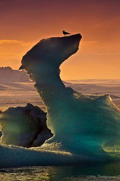 Seagull sitting on top of an iceberg in Jökulsárlón Lagoon, Iceland