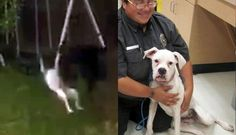 Awful Viral Video Gets Dog Saved From Her Abuser For the love of animals. Pass it on.