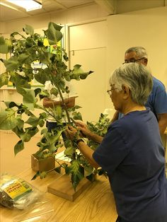 Air Layering, Plants, Layering, Plant, Planting, Planets