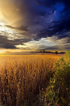 Amber Waves by Phil Koch on 500px