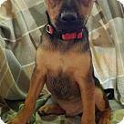 Baton Rouge, LA - Hound (Unknown Type)/Shepherd (Unknown Type) Mix. Meet Larry, a for adoption. http://www.adoptapet.com/pet/16931094-baton-rouge-louisiana-hound-unknown-type-mix