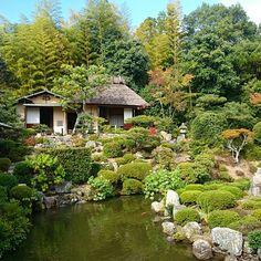 #等持院 #寺 #日本庭園 #庭 #芙蓉池 #京都 #tojiin #temple #japanesegarden #kyoto #japan