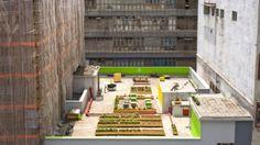 HK Honey | Michael Leoung | Hong Kong | In una città dove non c'è spazio per l'agricoltura, su questo tetto, una comunita di artisti collaborano per coltivare cibo locale e allevare api.
