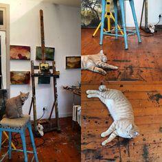 Flooring, Studio, Cats, Animals, Instagram, Gatos, Animales, Animaux, Wood Flooring