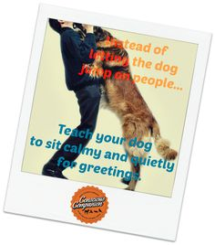 Thursday's Training Tutorial: How to Stop a Dog from Jumping on People!  Polite doggie greetings are easily taught, but we must be consistent! Learn how to here: http://www.quickanddirtytips.com/pets/dog-behavior/how-stop-dog-jumping?page=all  P.S. The Dog Trainer provides a podcast in the link above. She is fabulous and makes learning so easy, so be sure to click the link and Tune In!