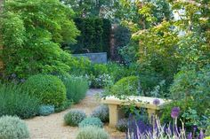 This charming garden includes ribbons of soft color in a romantic planting style and timeless simplicity. Packed with deer and drought resistant plants, this garden is a delight in terms of fragrance, forms and texture. Small Garden Shrubs, Bush Garden, Gravel Garden, Garden Bed, Drought Resistant Plants, Drought Resistant Landscaping, Drought Tolerant, Spring Flowering Bulbs, Evergreen Shrubs