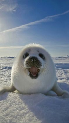 Imagem de cute, animal, and seal