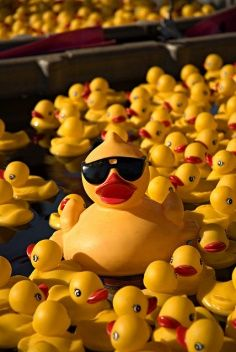 """Andy & the kids were at the store when Bella shouted """"mom look at the daddy ducky! He must have been playing poker last night cuz he's wearing shades like our daddy! Aesthetic Colors, Rainbow Aesthetic, Mellow Yellow, Color Yellow, Big Yellow, Shades Of Yellow, Lemon Yellow, Happy Colors, Orange"""