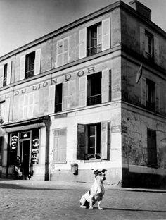 Black and White Reflections. - mimbeau:     The Dog  Paris circa 1930  Brassaï