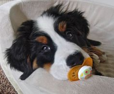 Puppy and pacifier.  Stop chewing on stuff! - I don't know if that would actually work but it's pretty darn cute!