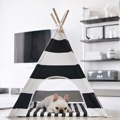 How cute is this dog teepee?
