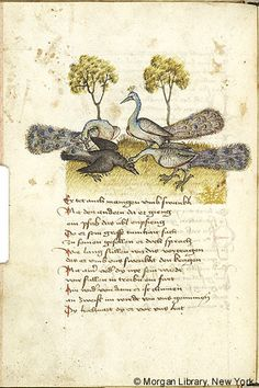 Peacocks and Crow - Austria, late 15th c., Medieval Manuscript Images, Pierpont Morgan Library, Renner. MS M.763 fol. 34v