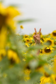Peace from a huge field of sunflowers. This was a great day.