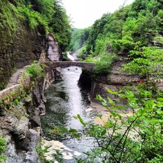 Wildflowers of Upstate NY | Letchworth state park in upstate ny!