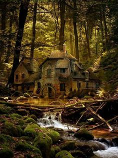 Floresta negra Alemania   EUROPA