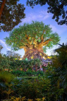 Tree Of Life #disney #disneysecrets