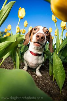 Photographer Takes the Cutest and Most Adorable Dog Photos You've Ever Seen