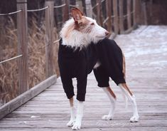 Check Our Ohio Fleece Dog Suit designed by Euro Dog Designs. Perfect for layering underneath a winter coat when it's really cold, or to use on it's own when it's just a bit chilly. Dog Suit, Dog Fashion, Dog Design, Winter Coat, Euro, Normcore, Suits, Dogs, Animals