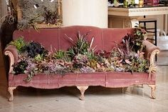 Succulent booth display - Yahoo Image Search Results