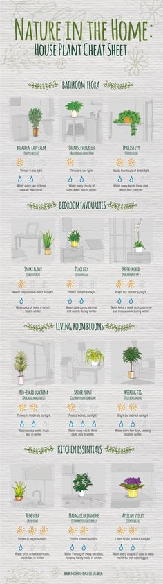 It isn't often you find a home accessory that looks good, boosts your mood and cleans your living space. We are, of course, talking about plants. With so many varieties, however, and with such confusion about indoor plant care, it isn't always easy to know which to buy. That's where our