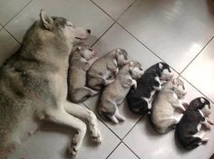 Family Nap Time