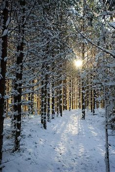 This looks like a nice place to frolic.    [Snowy Forest in Sweden]