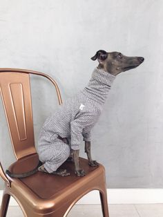 italian greyhound and whippet clothes / iggy jumpsuit / Dog Sweater / dog clothes / ropa para galgo italiano y whippet/ GRAY JUMPSUIT Underwear, Indian Elephant, Siberian Tiger, Cute Baby Animals, Wild Animals, Italian Greyhound, Snow Leopard, Whippet, Dog Grooming