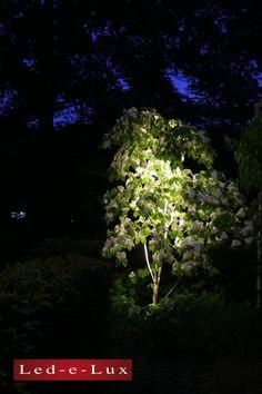 Een mooi voorbeeld van de Minispot Diffuus die een kleine boom aanlicht. Alle led verlichting wordt bij Led-e-Lux geproduceerd en ontworpen. Spot Design, Led