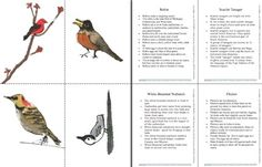 Here's a nice set of birdwatching flash cards with images and information.