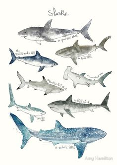 Sharks | Canvas Print