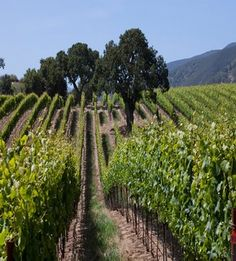 Santa Lucia Highlands: 6 Pinot Noirs & Chardonnays to Try » Wine Oh TV