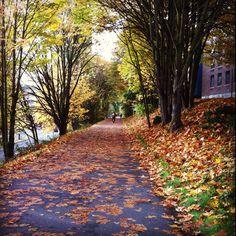 University Of Washington Campus Fall