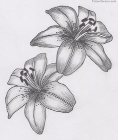 lily flower tattoo - Google Search