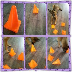 dog training,teach your dog,dog learning,dog tips,dog hacks Brain Games For Dogs, Dog Games, Animal Games, Diy Dog Toys, Pet Toys, Diy Puzzle Toys For Dogs, Dog Enrichment, Dog Puzzles, Diy Holz